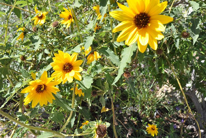 Yellow flowering shrub plantmaster blog category mightylinksfo