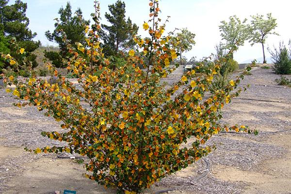 Cal Flora Nursery